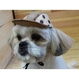 lacinho para cães atacado Morumbi