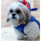 onde encontro fornecedor de roupa para cachorro com touca Itaim Paulista
