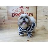 roupas de frio para cachorro Anália Franco