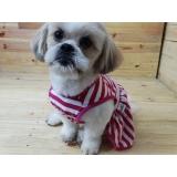 roupas para cachorro filhote Itatiba