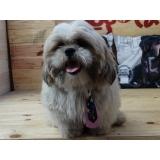 venda de laços de cetim para pet shop Jardim Paulistano