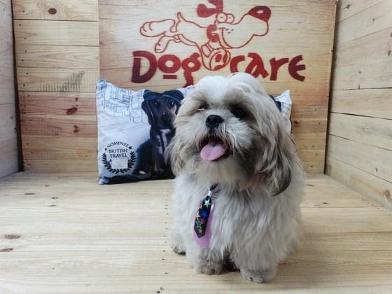 Venda de Lacinho de Cachorro Cajamar - Laços de Fita para Pet Shop